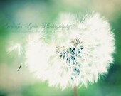 dandelion photography emerald green white mint tan black brown / IN STOCK / 8x10 Fine Art Photograph / Fly Away With Me