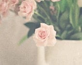 flower photography blush pink cream ivory green white rose roses  / 8x10 Fine Art Photograph / Petite Rose n.3