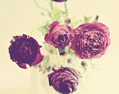 purple flower photography / ranunculus purple green teapot / 24x30 fine art photography