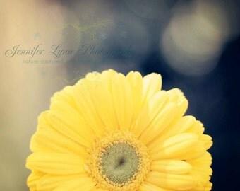 yellow decor flower photography yellow navy mint green daisy / 8x10 Fine Art Photograph / Rise And Shine
