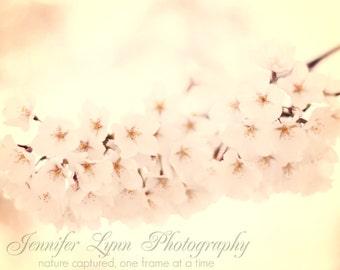 flower photography pink white ivory cream yellow cherry blossoms / 8x10 Fine Art Photograph / Washington DC / Cherry Blossoms n.2
