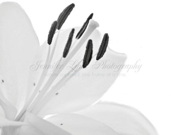 Moving Forward n.1 / 8x10 Fine Art Photograph / flower / spring / white gray grey black