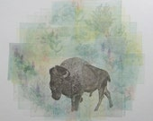Let Buffalo Roam Free - Etching for Buffalo Field Campaign 2