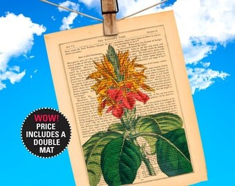 """Flower Book Print, Aphelandra (Fiery Spike) Botanical Illustration printed on an 1865 Antique Book Page Plays-Of-Shakespeare """"MAT-INCLUDED"""""""