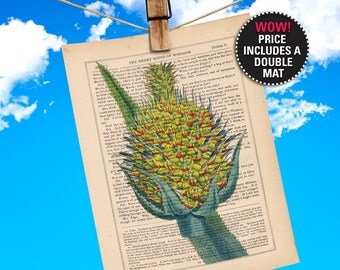 """Pineapple Book Print  Botanical Illustration printed on an 1865 Antique Book Page, Plays-Of-Shakespeare """"MAT-INCLUDED"""""""