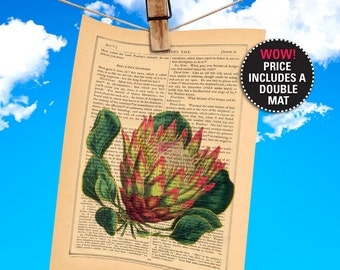 """Flower dictionary print, book page, Protea Cynaroides, Honeypot Botanical Illustration on Antique Book, Plays-Of-Shakespeare """"MAT-INCLUDED"""""""