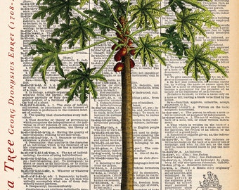"""Papaya Tree dictionary print, Vintage Botanical Illustration, Printed on an 8""""x11"""" Antique Dictionary Page."""