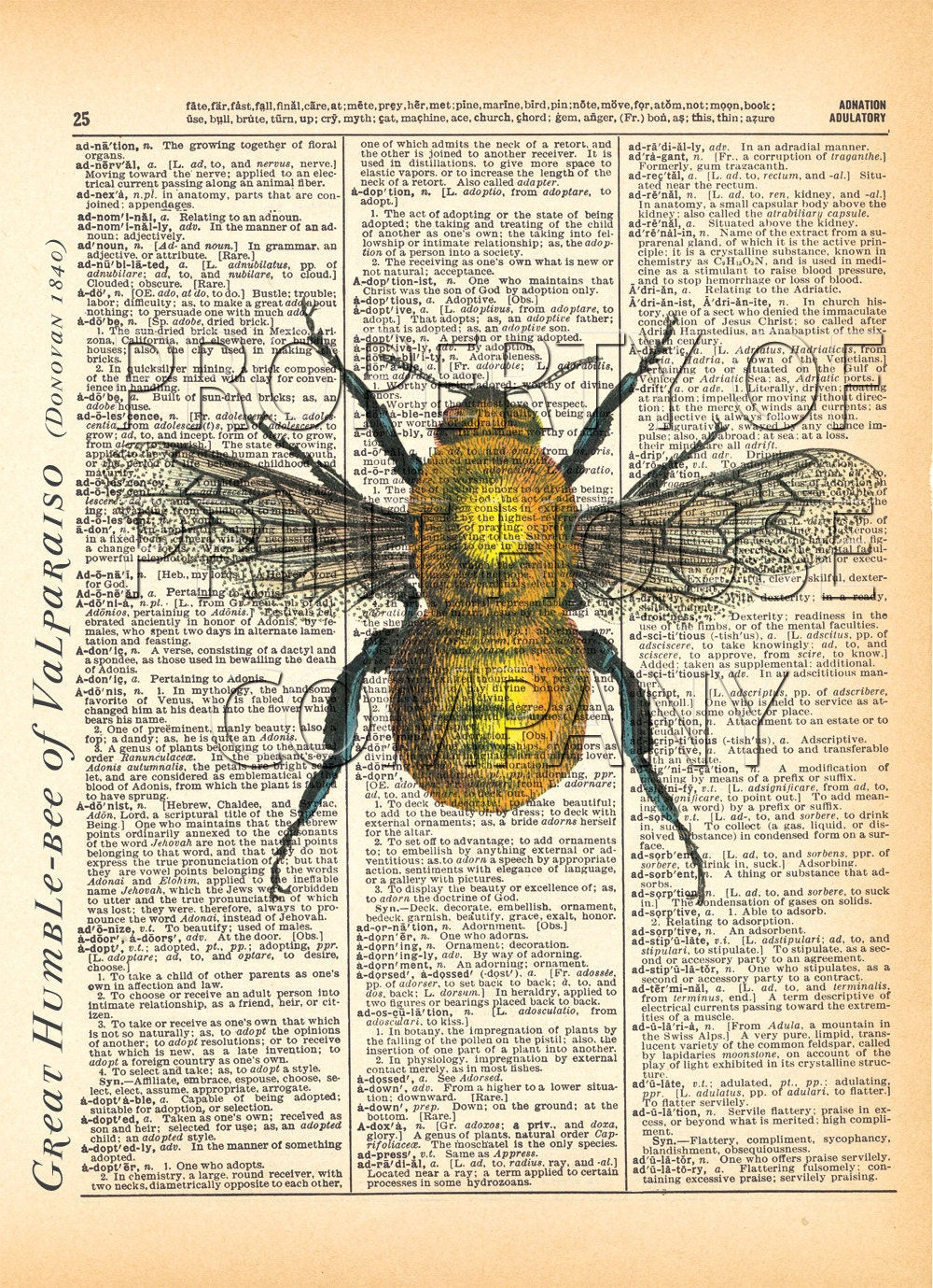 bumble bee insect 1800 u0027s illustration printed on an