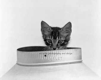 Peekaboo Kitty 8X10 Black and White, signed