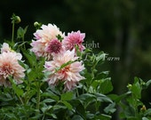SALE (50% off) - Flowers Set II - Photo Note Cards - Set of 4 different images
