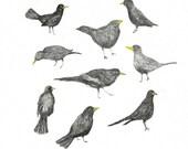 giclee print, Birds