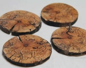 a spalted slice - a set of 4 natural wood coasters from fallen trees