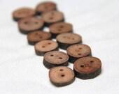 a dozen baby beech buttons