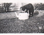 Black Cat trying to drink from Tea Pot Real Photo Snap Shot 1950's