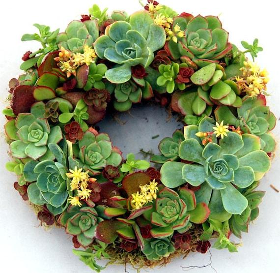 "Succulent Wreath Happiness 9"""