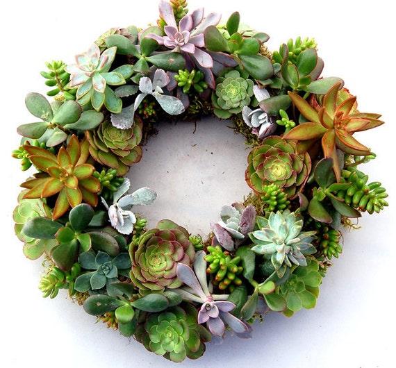 """Succulent Wreath Bright Stars 14"""""""