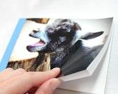 Notebook/Sketchbook/Journal - 4x6 - Singin the Blues- Original Photograph