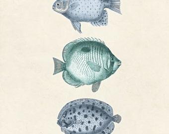 "Vintage Fish Print ""Les Poissons"" 8x10 P1"