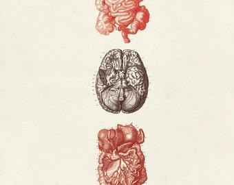 "Vintage Human Anatomy ""L'anatomie Humaine"" Print 8x10 P5"