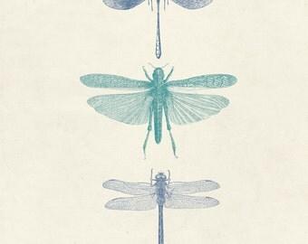 "Vintage Dragonflies ""Les Libellules"" Print 8x10 P14"