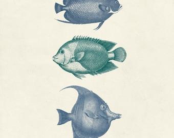 "Vintage Fish Print ""Les Poissons"" 8x10 P28"