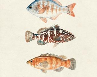 Les poissons etsy for Coy poisson
