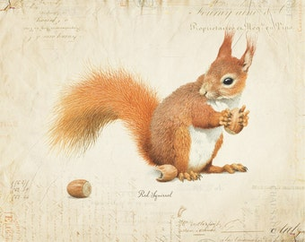 Vintage Red Squirrel on French Ephemera Print 8x10 P56