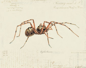 Vintage Spider on French Ephemera Print 8x10 P57