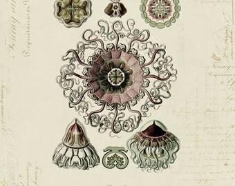 Vintage Medusa on French Ephemera Print 8x10 P62