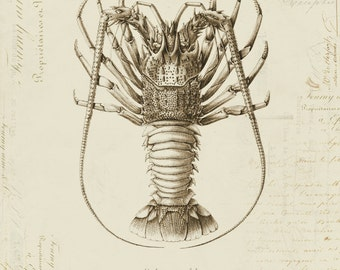 Vintage Madagascar Lobster on French Ephemera Print 8x10 P91