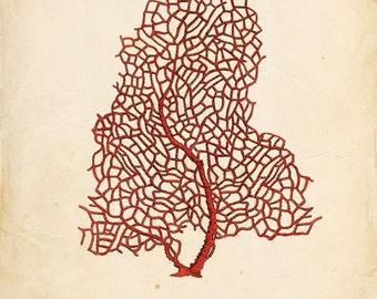 Vintage Sea Coral on Antique Ephemera Print 8x10 P101