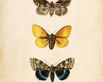 Vintage Butterflies on Antique Ephemera Print 8x10 P139