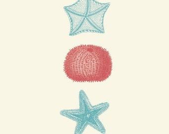 """Vintage Sea Kelp """"Varech"""" Print 8x10 P187"""