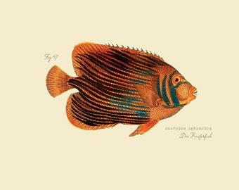 "Vintage Fish ""Der Kaiferfish"" Print 8x10 P185"
