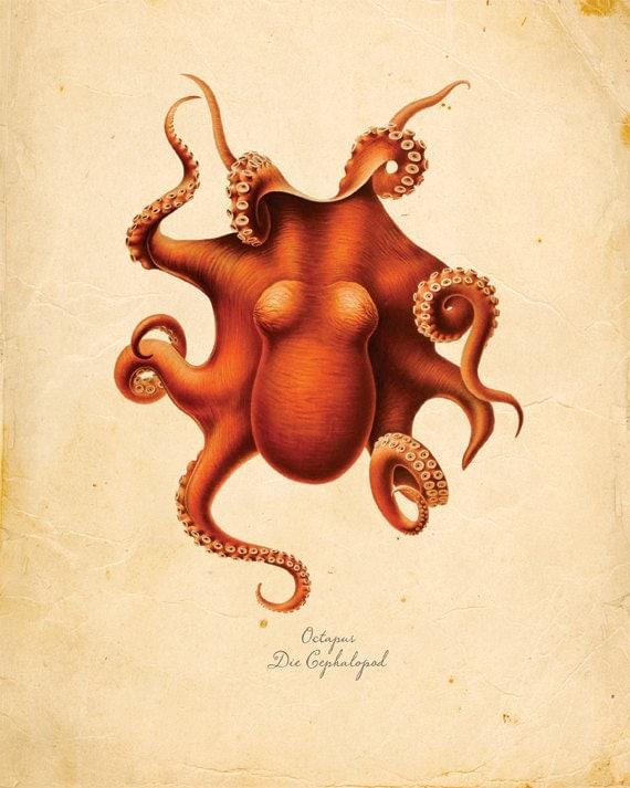 Vintage Octopus Squid Print 8x10 P72