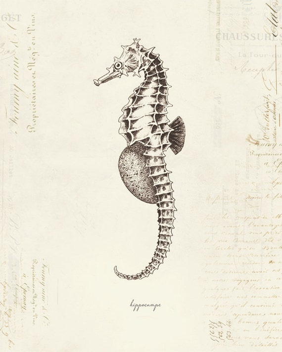 Vintage Seahorse Hippo...