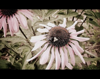 PHOTOGRAPH FLOWER and BEE