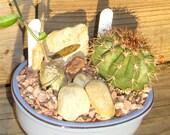 Pale Blue Bonsai Pot Fossil Fish Succulent Garden