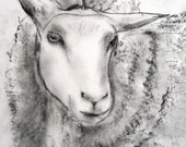 Sheep - Original Charcoal Drawing