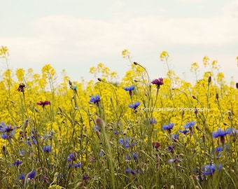 Field of Wildflowers Photo - Fine Art Photography, nature, landscape, yellow, flowers, wall art, yellow, country chic decor, print, spring