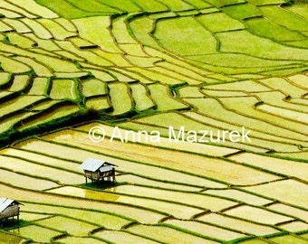 Thailand 11X14 Rice Fields Fine Art Photography Print  - Asian Wall Art - Asia Photography - Friend Art Gift - Holiday Art Gift