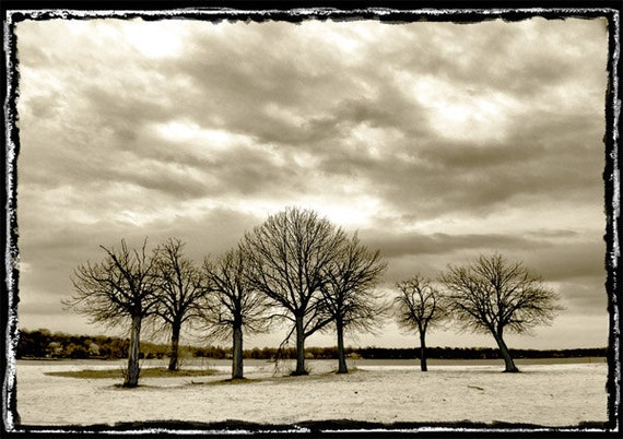 Black and White, Tree Photography, Sepia print, Landscape Photography, Travel, Beach, Lonely trees, Wall Art, Wall Decor