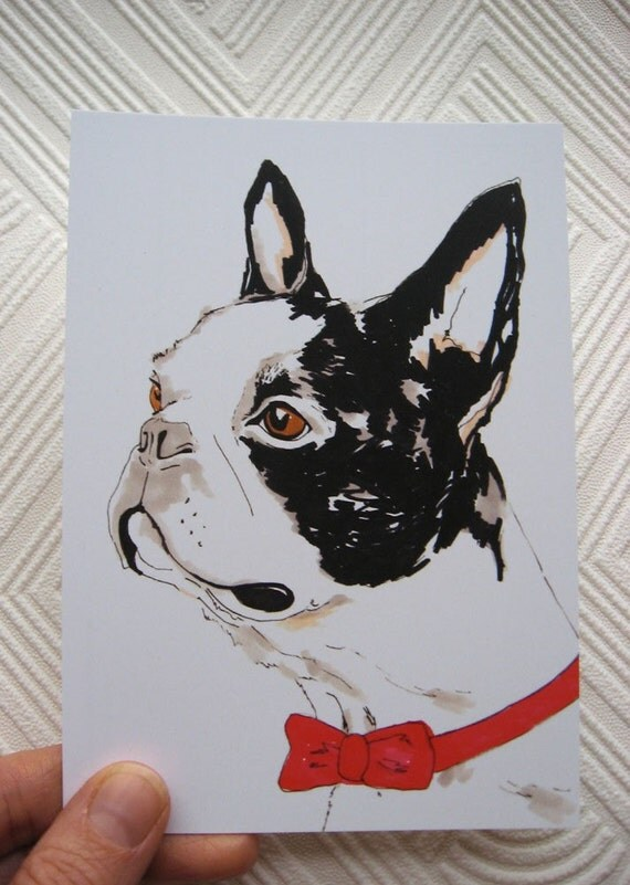 Boris the Boston Terrier- Postcard