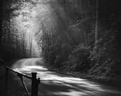 black and white photography, landscape, nature, 11 x 14 print
