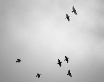 black and white photography, bird, foggy, nature, clouds, ethereal, birds in fog, 8 x 8 print