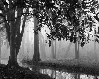 black and white photography, tree photography, landscape photography,  trees, forest, woodland, trees in fog, modern rustic, photography