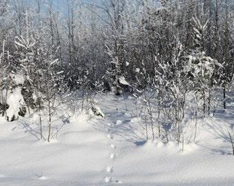 Winter 2 - Photo - 8x12 (21x30 cm)