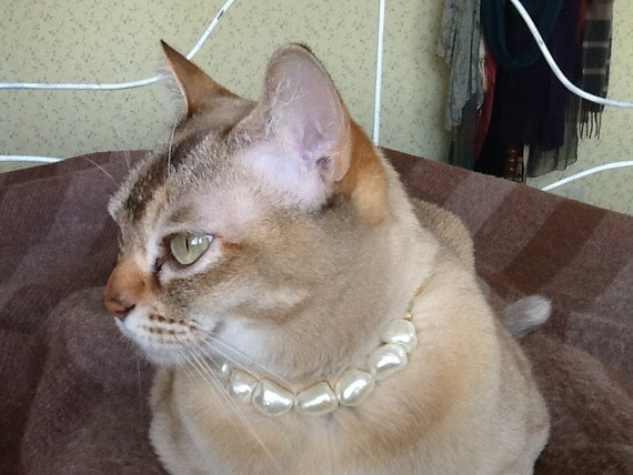 Pearl cat collar with safety clasp