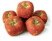 SALE Primitive  Nook Pdf Grungy Apples  E-Pattern OFG FAAP