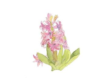 Botanical Watercolor Painting, Pink Hyacinth,  Art Print